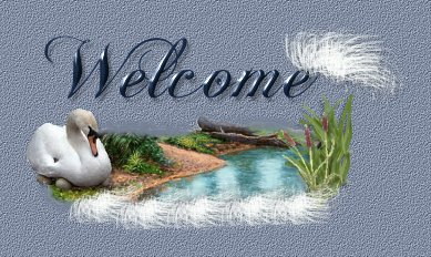 swan graphics,swan background graphics, free backgrounds, swan web graphics art,cygnus web graphics swans, trumpeter swans, graphics by sygnet