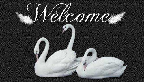 swan graphics,swan background graphics, backgrounds, web graphics swans, trumpeter swans, graphics by sygnet